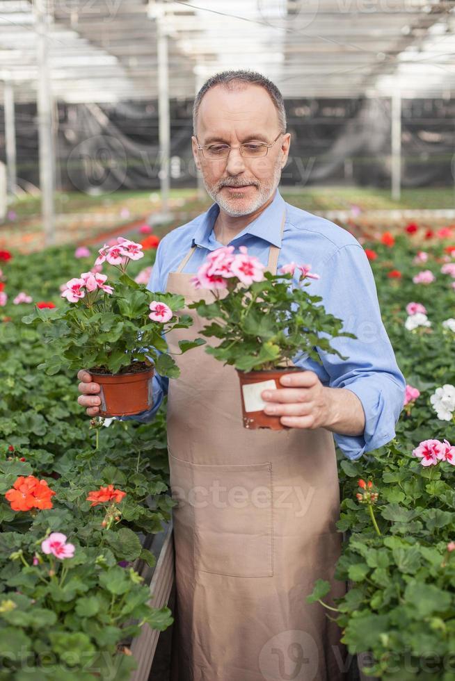 glad gammal trädgårdsarbetare planterar blommor foto