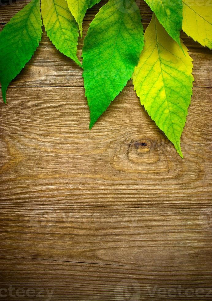 höstlöv över träbakgrund med kopieringsutrymme foto