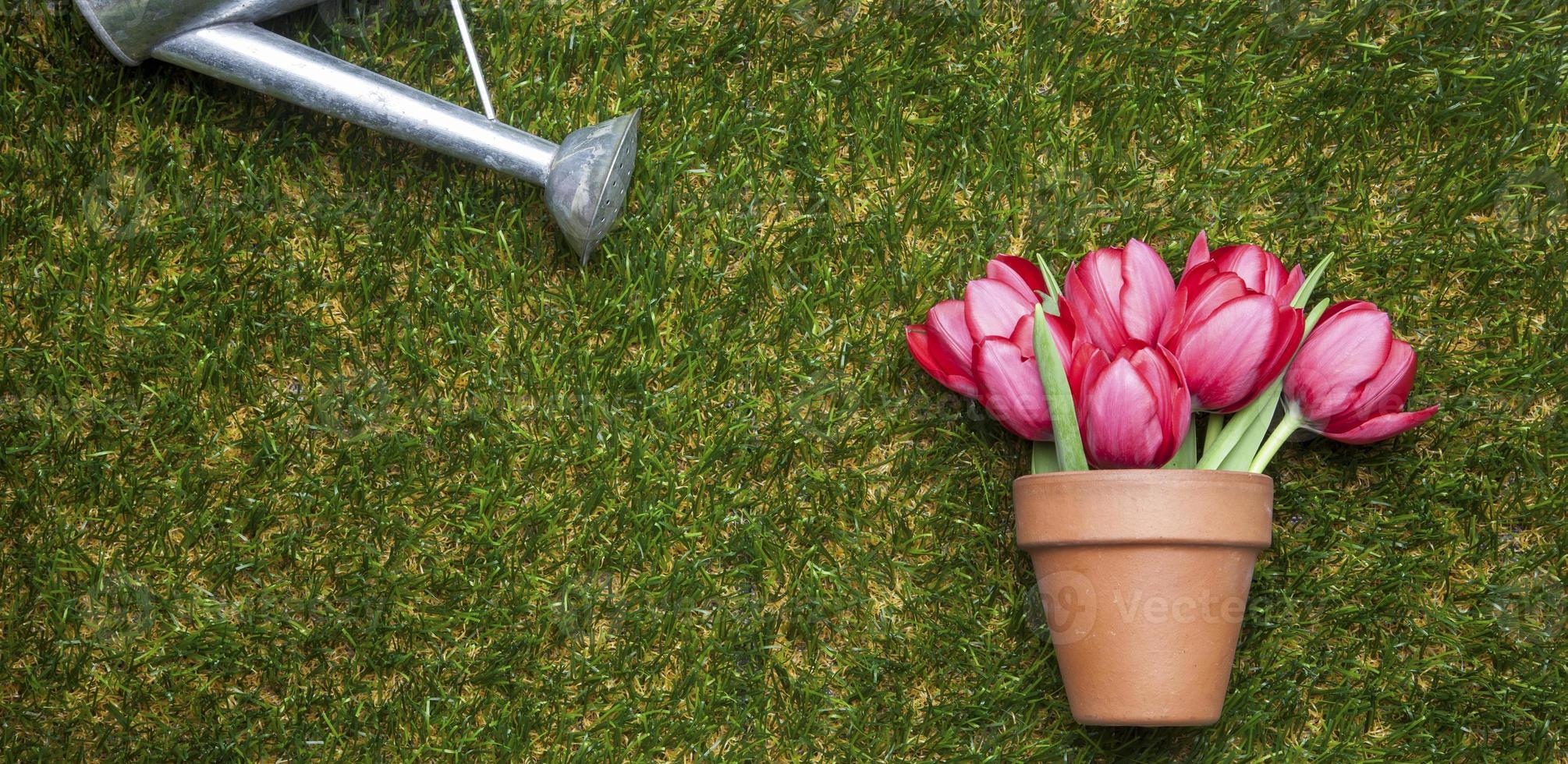 blomkruka med tulpaner på gräs, kopieringsutrymme foto