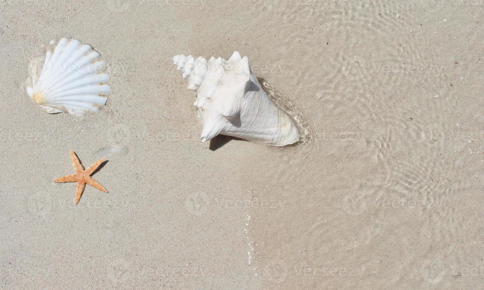 snäckskal på sand. kopiera utrymme foto