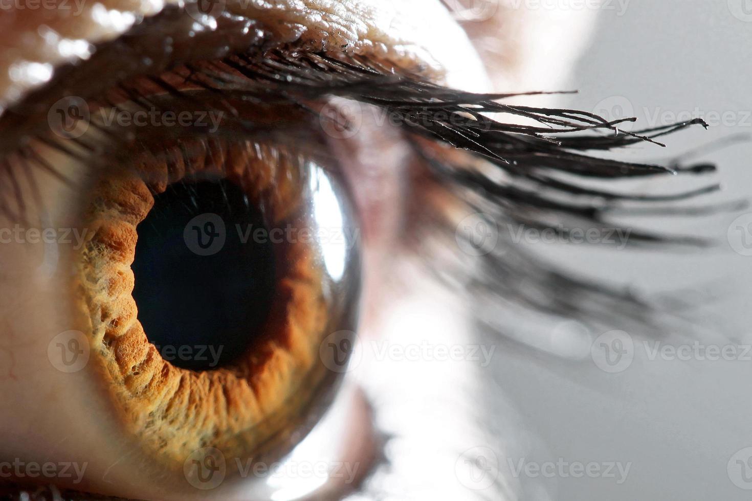 mänskligt öga foto