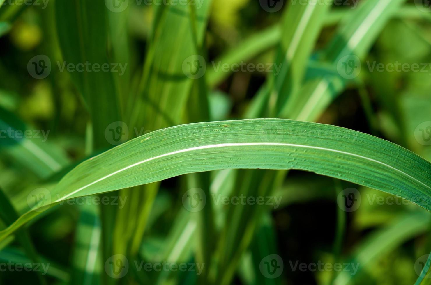 grönt blad på nära håll foto