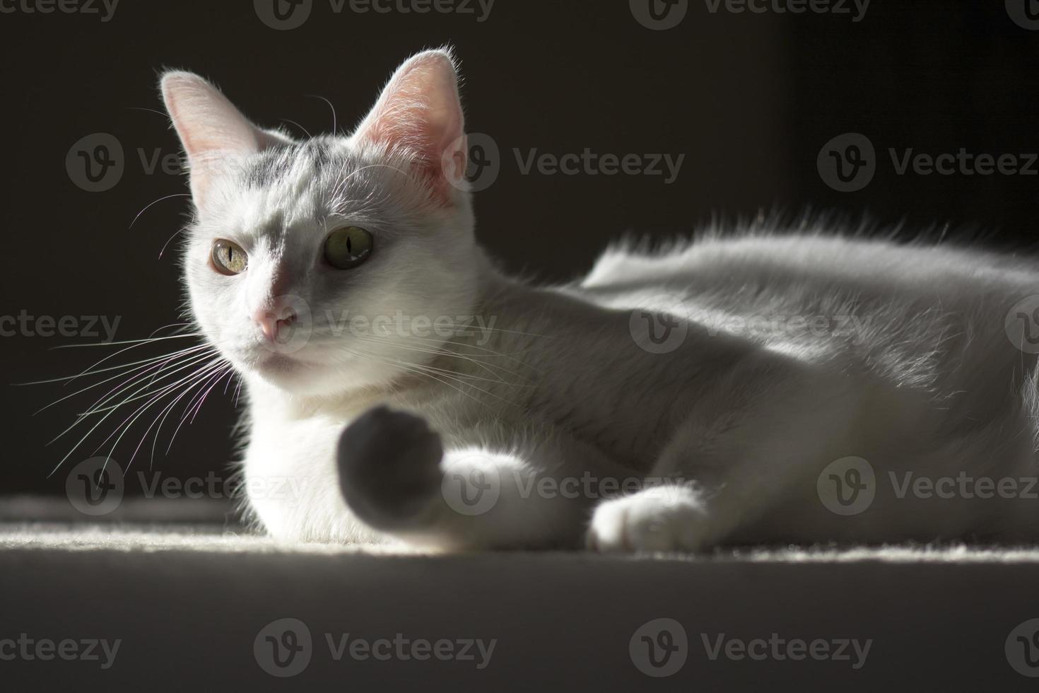 solbad och avkopplande kattkatt foto