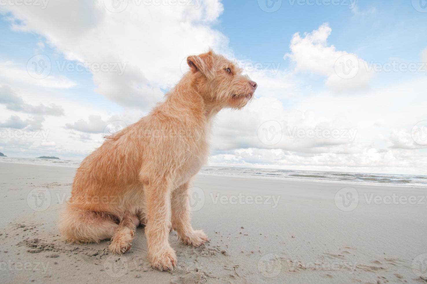 hunden kopplar av på stranden foto