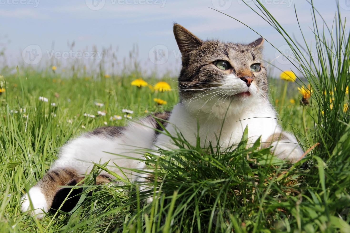 lilla katten är avslappnad i gräset foto