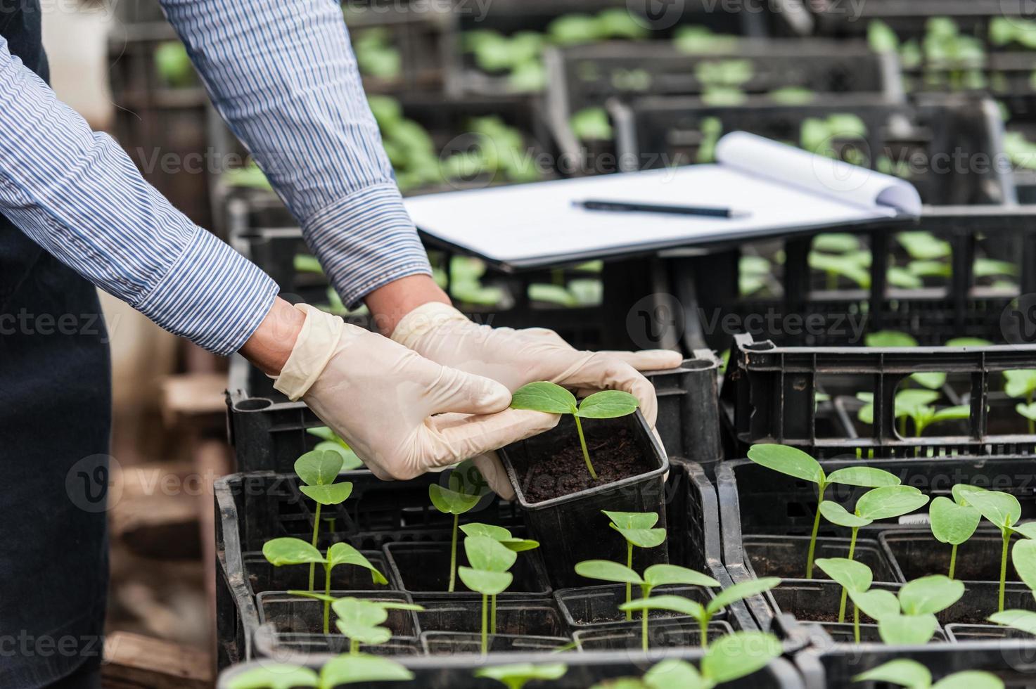ingenjör med urklipp och penna undersöker ett växtblad foto