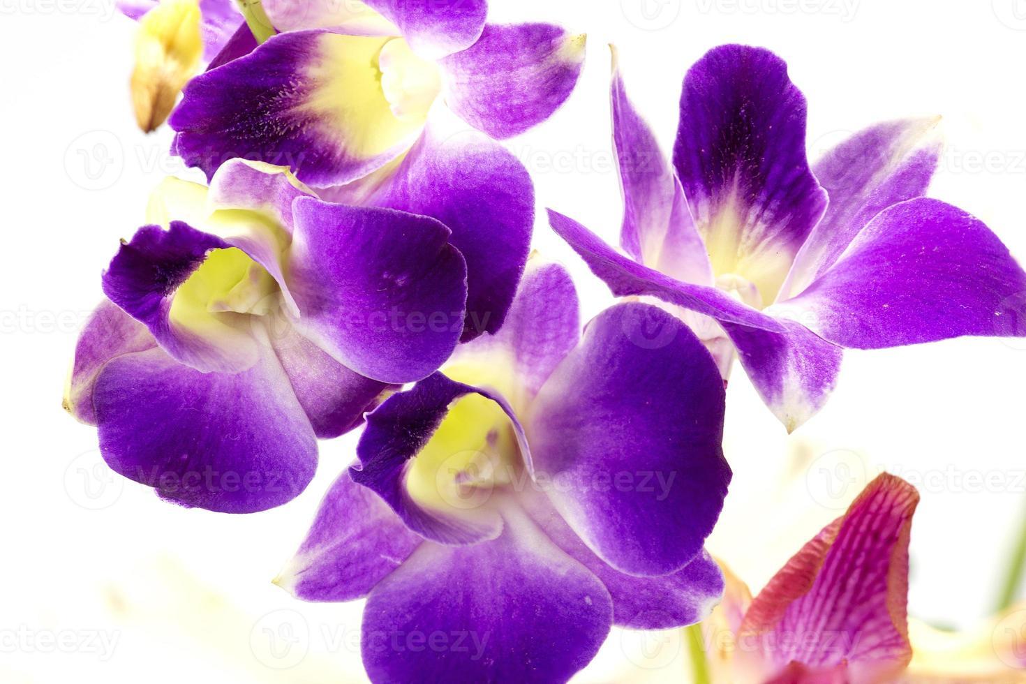 närbild lila orkidé foto