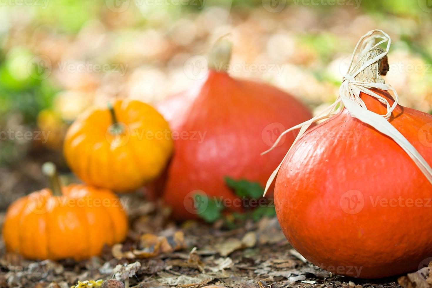 hösten grönsak närbild foto