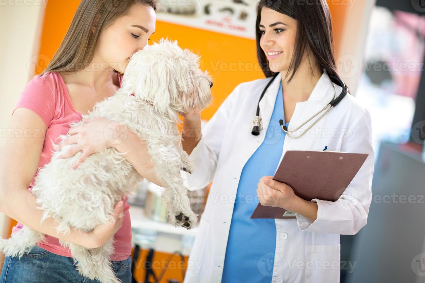 veterinär tröstande maltesisk hund foto