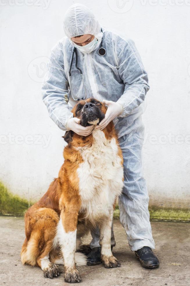 veterinär inspekterar och kontrollerar en hund. foto