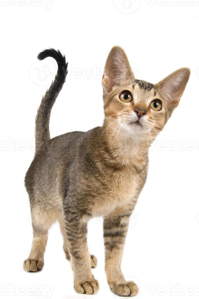 det finns en söt kattunge i studion foto
