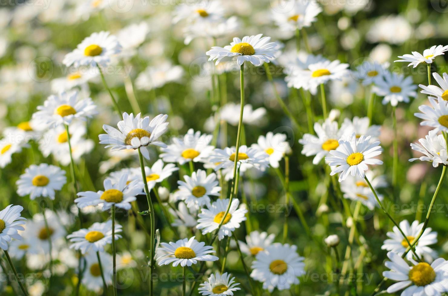 medicinska blommor foto