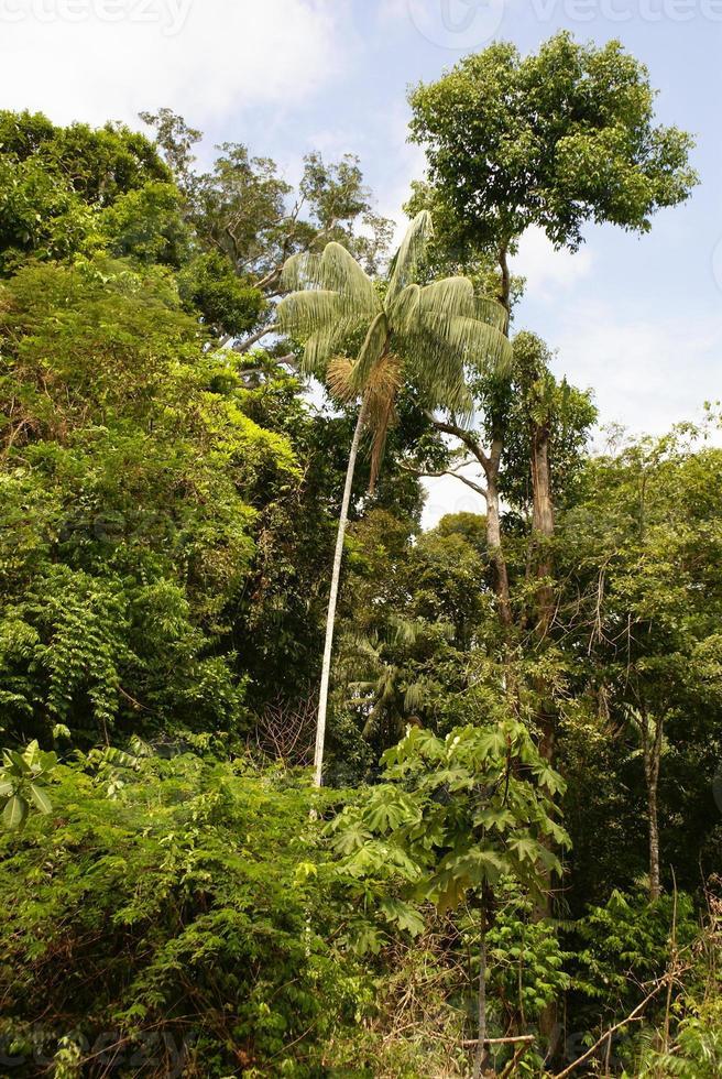 amazon djungel träd foto