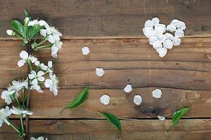 körsbärsblommor och kvistar på träbakgrund