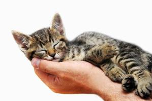 kattunge som sover på handflatan