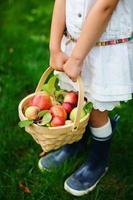organiska äpplen i en korg
