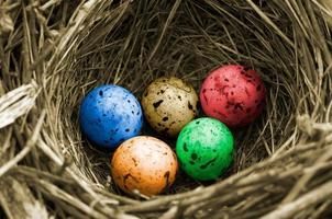 olympiska ägg (färgversion) foto