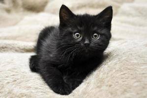 svart kattunge foto
