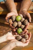 valnötter i manhänder foto
