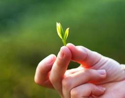 ung flicka som håller en växt