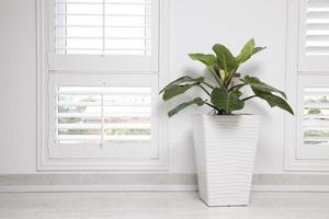vit kontorsvägg, fönster och grönt träd foto