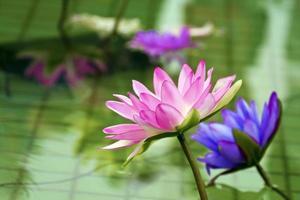 plast färgglada dekoration lotus i dammet, Taipei foto