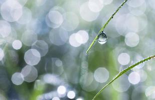 närbild av daggdroppar på grönt gräs foto