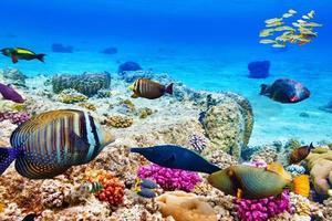 undervattensvärld med koraller och tropiska fiskar. foto
