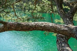 grön sjö i Österrike foto
