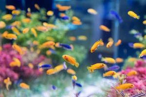 tropiska fiskar foto