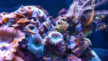 akvarium foto