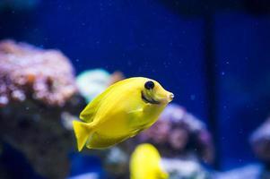 havsfisk foto