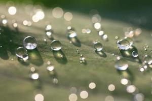vattendroppar på grönt blad foto