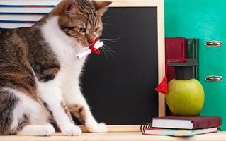 vetenskaplig katt foto