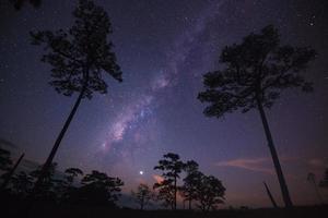 silhuett av träd med mjölkväg på en natthimmel foto