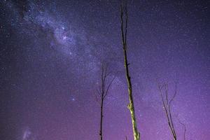 stjärnor över Queensland foto