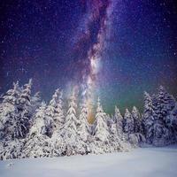 stjärnhimmel och träd i rimfrost foto