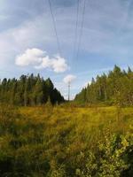 skog foto