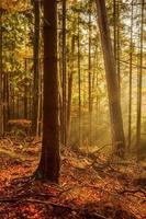 svart skog foto