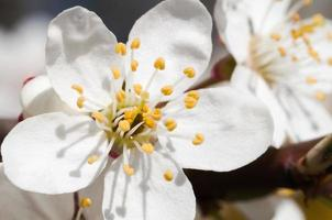 stjälkar av blommor. foto