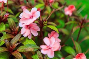 blomma och träd i trädgården foto
