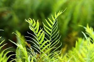grön ormbunke som växer i skogen foto