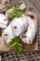 hög med färsk fisk foto