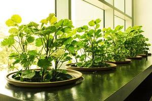 delad toning trädgård i byggnad foto