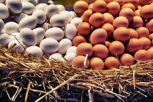 vita och bruna ägg foto