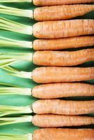färska organiska morötter foto