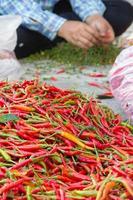 hög med chili på den lokala marknaden foto