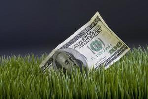 kontanter i gräset. foto
