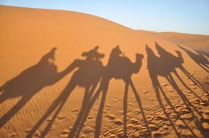 kamelskuggor i saharaöknen foto