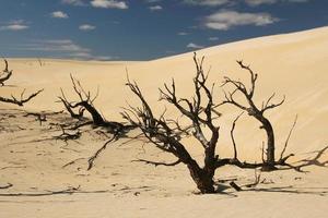 australiska öknen foto